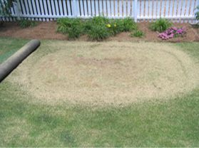 Backyard Putting Green Installation | StarPro Greens
